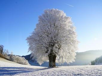La SALUTE vien MANGIANDO: l'inverno